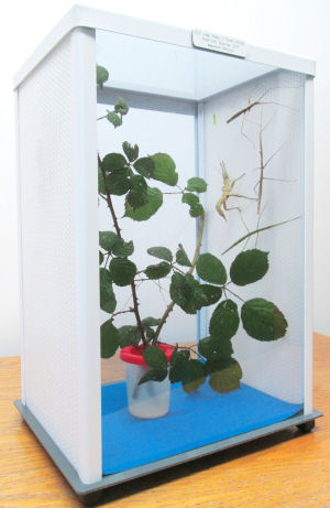 Small Life Supplies For Insect Cages Stick Insects